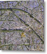 Last Leaf Of Winter Metal Print