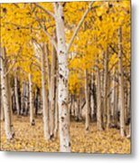 Last Of The Aspen Leaves Metal Print
