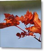 Last Of The Leaves Metal Print