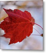 Last Of The Leaves Nature Photograph Metal Print
