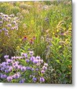 Last Rays Of Sun Light Wildflowers In Moraine Hills Sp Metal Print