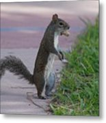 Last Squirrel Standing Metal Print