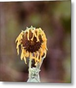 Last Sunflower Metal Print