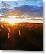 Last Sunset, Plum Island Metal Print