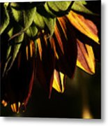 Late Afternoon Metal Print