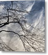 Late Afternoon On A Cold Day In December 3 Metal Print