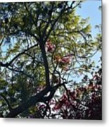 Late Afternoon Tree Silhouette With Bougainvileas II Metal Print