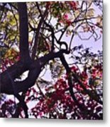 Late Afternoon Tree Silhouette With Bougainvilleas IIi Metal Print