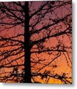 Late Autumn Sunset Metal Print