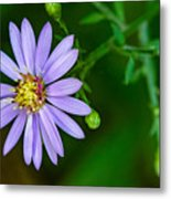Late Purple Aster Metal Print