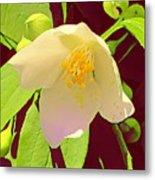 Late Spring Flower Metal Print