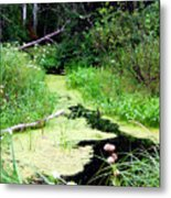 Late Summer At The Creek Metal Print