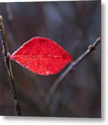 Lateral Red Leaf Metal Print