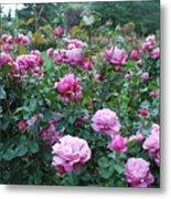 Laugerfeld Roses Metal Print
