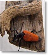 Laughing Beetle Metal Print