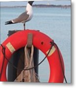 Laughing Gull At Lewes Metal Print