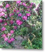 Laurel Mountain Tree Metal Print