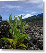 Lava And Villa Rica Volcano Metal Print