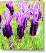 Lavender Abstract Metal Print