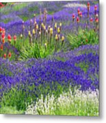 Lavender And Flowers Oh My Metal Print