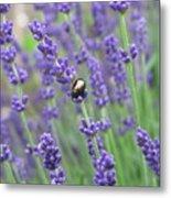 Lavender Beetle Metal Print