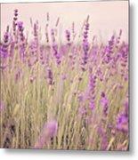 Lavender Blossom Metal Print