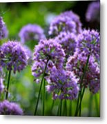 Lavender Breeze Metal Print