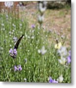 Lavender Butterflies Metal Print