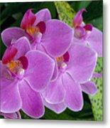 Lavender Colored Orchids Metal Print