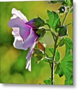 Lavender Flower In The Sun Metal Print