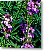 Verbena At Pilgrim Place In Claremont-california   Metal Print