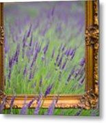 Lavender Frame Metal Print