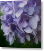 Lavender Hydrangea Metal Print