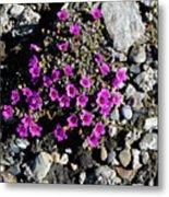 Lavender In The Rocks Metal Print