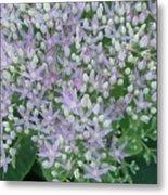 Lavender Lovelies Metal Print