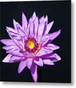 Lavender On Black Metal Print