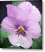 Lavender Pansy And Rain Metal Print by Eva Thomas