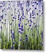 Lavender Patterns Metal Print