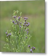 Lavender Purple Verbena Wildflowers  Metal Print