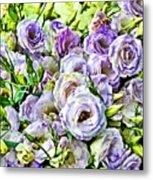 Lavender Ranunculus  Metal Print