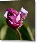Lavender Rose Metal Print