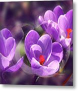 Lavender Spring Metal Print