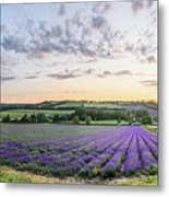 Lavender Sunset Panorama Metal Print