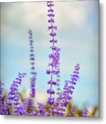 Lavender To The Sky Metal Print