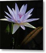Lavender Tropical Water Lily Metal Print