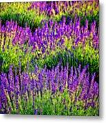 Lavenderous Harmony Metal Print