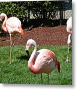Lawn Ornaments Metal Print