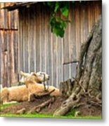 Lawnmowers At Rest Metal Print