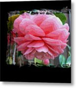 Layers Of Pink Camellia Dream Metal Print