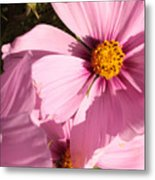 Layers Of Pink Cosmos Metal Print